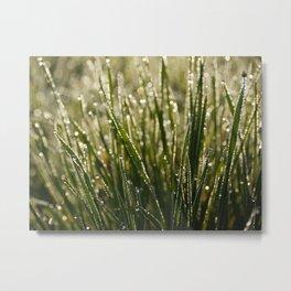 rain forest Metal Print