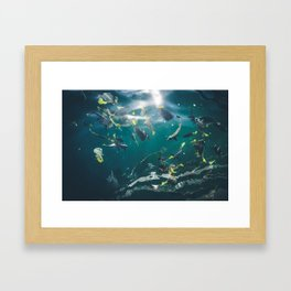 Getting Fishy in Cabo San Lucas Framed Art Print