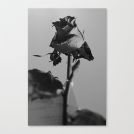 Black and Rosy Canvas Print