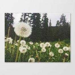 Field of Dreams 1 Canvas Print