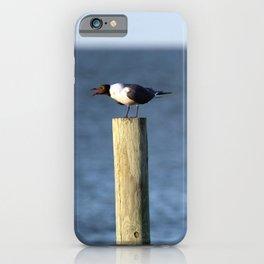 Ocracoke Seagull 3 iPhone Case