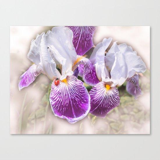 Gladiolus and ladybug Canvas Print