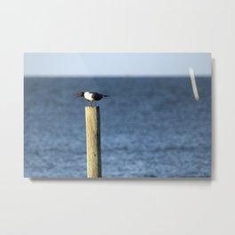 Ocracoke Seagull 3 Metal Print