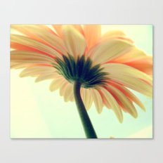Flower in the spring Canvas Print