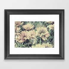 Desert Daisies - Daisy Project in memory of Mackenzie Framed Art Print