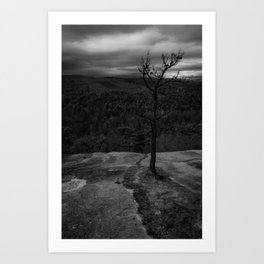 Rooted in stone Art Print