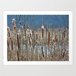 Cattail, Bulrush and Wetlands Art Print