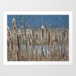 Cattail, Bulrush and Wetlands Art Print