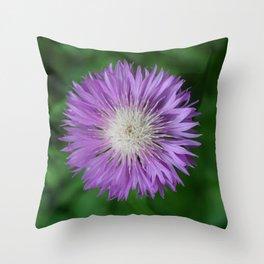 Violet and Fluffy Centaurea Throw Pillow
