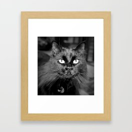 Bewitching Cat Framed Art Print