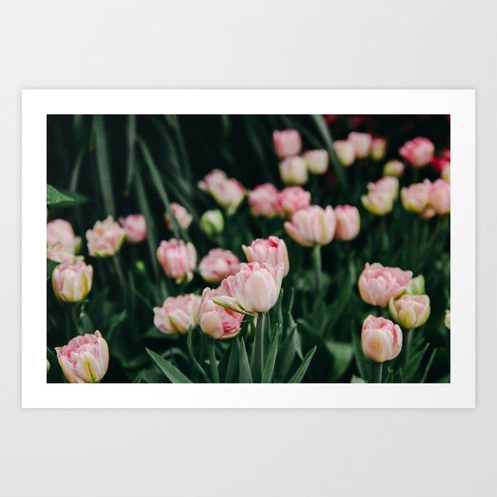 Blush Tulips By The Dozen Art Print
