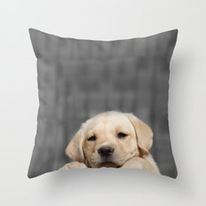 A dog in Bag Throw Pillow