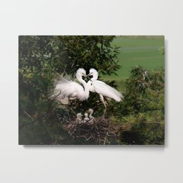 White Egret Family Metal Print