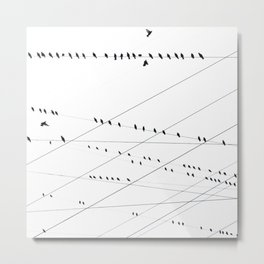 B&W Birds & Lines Metal Print