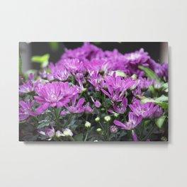 Longwood Gardens Autumn Series 219 Metal Print