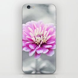 Pink Grey Flower Photography, Zinnia Floral Gray Nature Flowers iPhone Skin