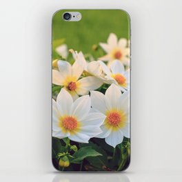 Dahlia White Flowers Outdoors Flowerbed Solar Rays iPhone Skin