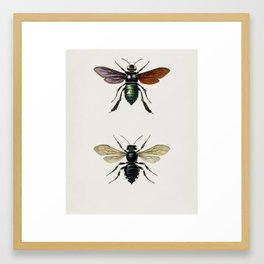 Different types of insects illustrated by Charles Dessalines D' Orbigny (1806-1876) 12 Framed Art Print