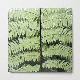 Monteverde Cloud Forest Fern Metal Print
