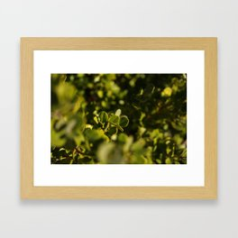 Green is the new black. Framed Art Print