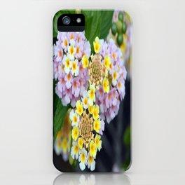 Tropical Plant Lantana Camara or West Indian Lantana iPhone Case