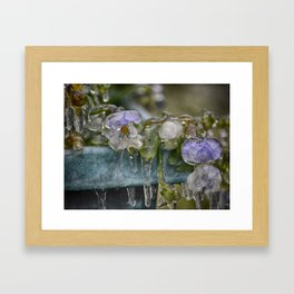Pansies on Ice Framed Art Print
