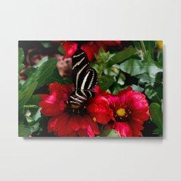 Zebra Longwing Butterfly on a Red Flower Metal Print