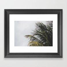 palm treee Framed Art Print
