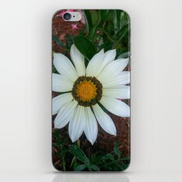 Blossom Daisy iPhone Skin