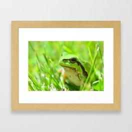 Green European Tree Frog Framed Art Print