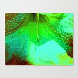 Colorful Angels Canvas Print