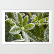 Morning Dew I Art Print