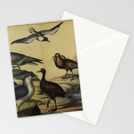 027 machetes pugnax Common Moorhen rallus rex parra lacana Black headed Gull Great Black backed Gull European or American Herring Gull10 Stationery Cards
