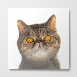 Funny Cat Face Big Eyes Tiger  Metal Print