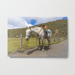 White Horse Tied Up at Cotopaxi National Park Ecuador Metal Print