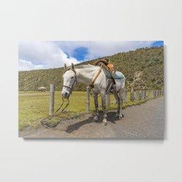 White Horse Tied Up at Cotopaxi National Park Ecuador Metal Print