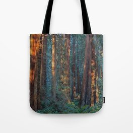 Redwood Sunrise Tote Bag