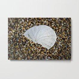 Sand Dollar Metal Print