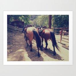 California Horses  Art Print