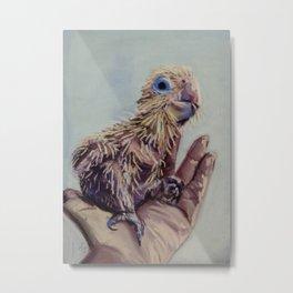 Sulphur Crest Cockatoo Chick Metal Print