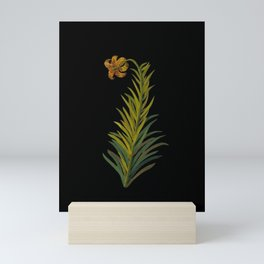 Lilium Byzantinum Mary Delany Delicate Paper Flower Collage Black Background Floral Botanical Mini Art Print