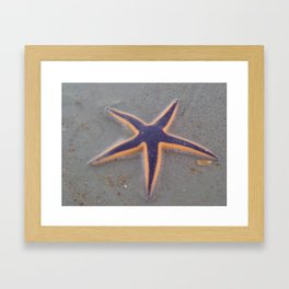 Royal Starfish Framed Art Print