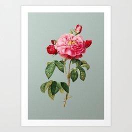 Vintage Duchess of Orleans Rose Botanical Illustration on Mint Green Art Print
