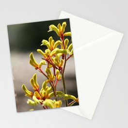 Kangaroo paws Stationery Cards