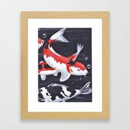 Koi carp, orange, white and black ornamental fish swimming gracefully. Framed Art Print