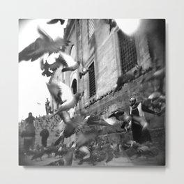 flight of pigeons Metal Print