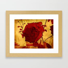 2nd Place Rose - 024 Framed Art Print