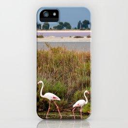 Flamingos in Camargue iPhone Case