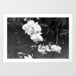 Let the Petals Fall Art Print