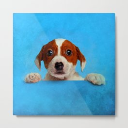 Cute Jack Russell Terrier Puppy Metal Print